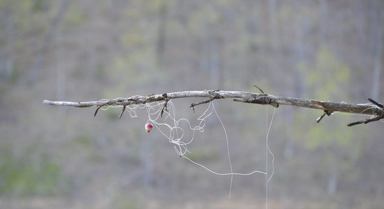 """Fishing line and bobbin stuck on tree at Douthat State Park"" by ""Virginia State Parks"" on Flickr"