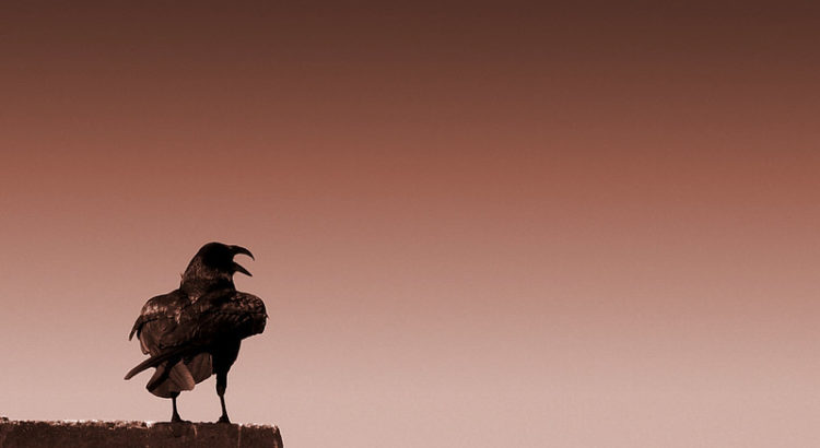 """Raven"" by ""Jim Bahn"" on Flickr"